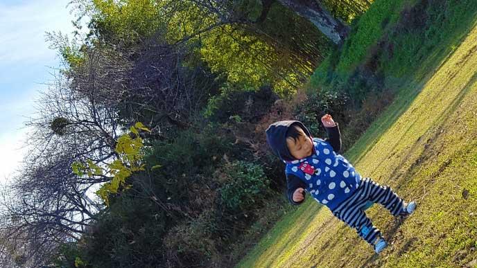 公園の芝生をヨタヨタしながら歩いてる赤ちゃん