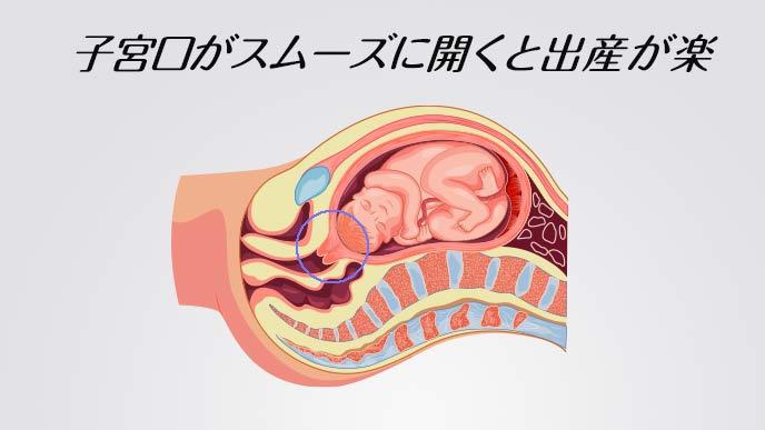 妊婦の人体解剖図