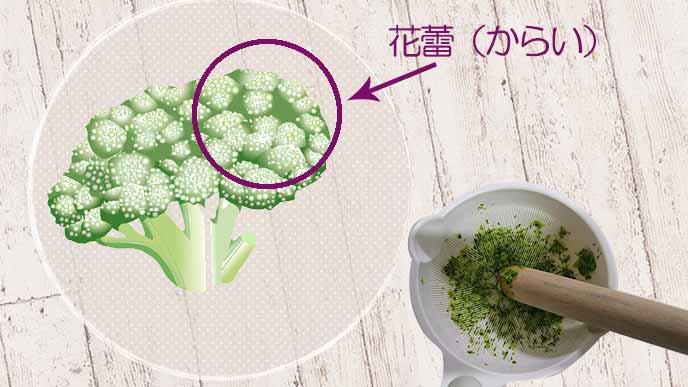 ブロッコリーの花蕾