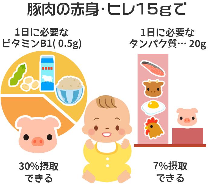 豚肉15gに含まれるタンパク質とビタミンB1が赤ちゃんの1日必須摂取量に占める割合を示したイラスト