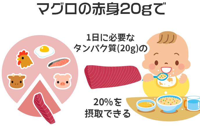 マグロの赤身20gで1日に必要なタンパク質(20g)の20%を摂取できる