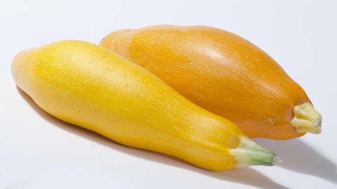 黄色のズッキーニ