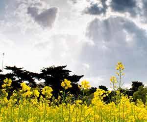 春の光と花
