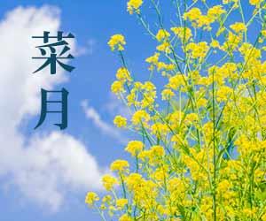 菜の花と菜月
